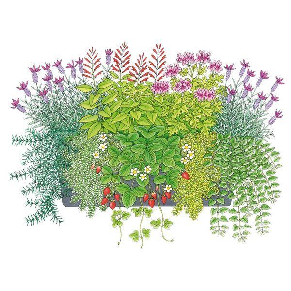 Aromatische Pflanzideen: Gartencenter Ostmann grün erleben