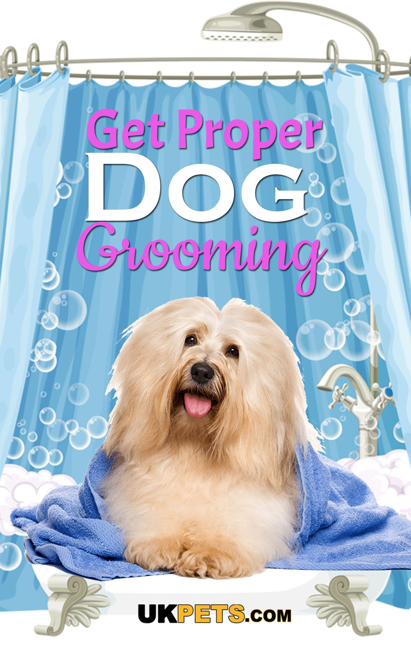 Dog Grooming Should You Do It Yourself? (With images