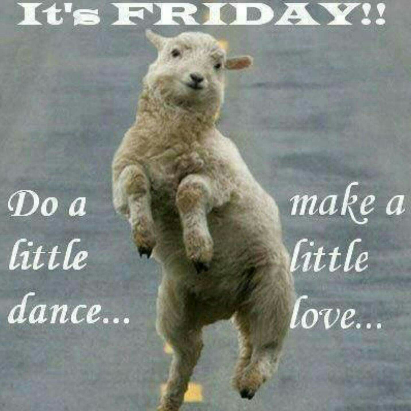 Friday Its Friday Quotes Funny Sheep Friday Quotes Funny