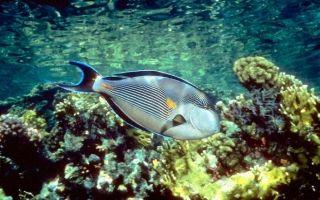 Meer Bilder Fische Kostenlos Fische Schone Fische Tierbilder