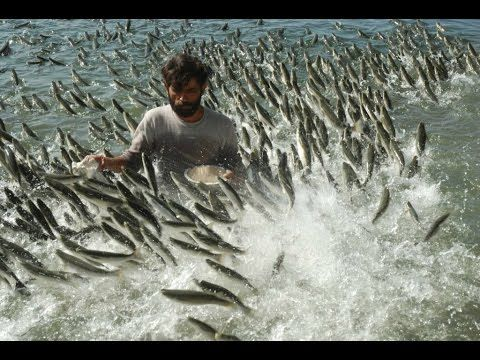 اسماك تهجم على الصيادين سبحان الله منظر جميل جدا Funny Fishing Pictures Wildlife Photography Fishing Pictures