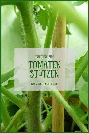 Tomaten stützen und festbinden #tomatenpflanzen
