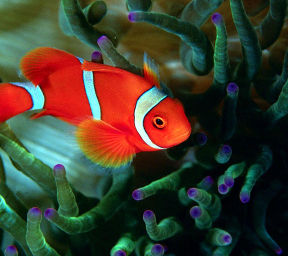 Coral Reef Animals Names | Animal,fish,sea animal,clownfish ...