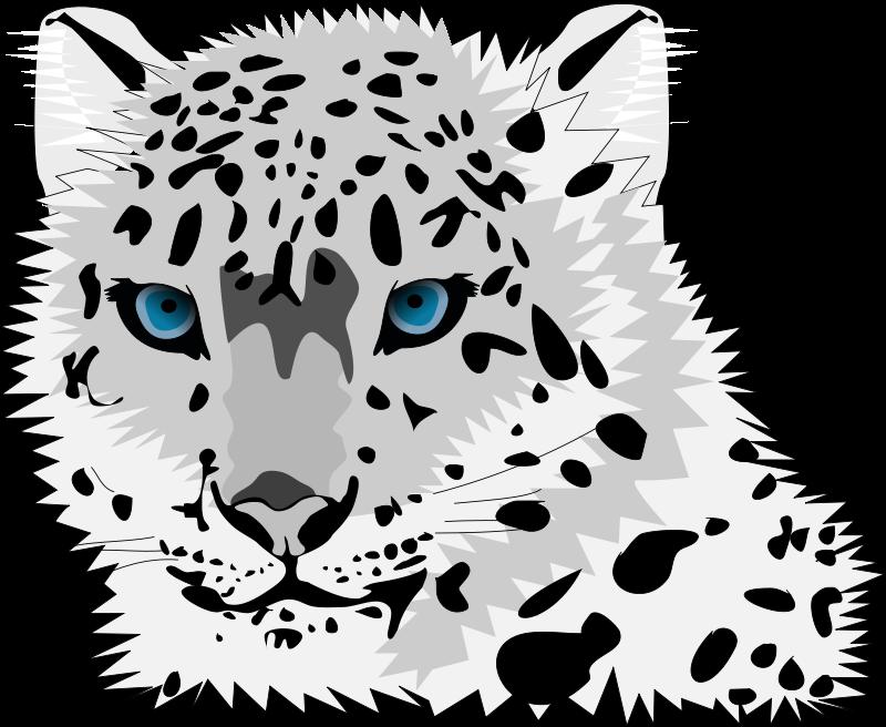 Snow Leopard Png 800 656 Pixels Snow Leopard Pictures Snow Leopard Leopard Pictures