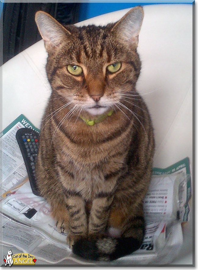 Read Angel's story the Tabby from London, UK and see her