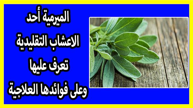 الميرمية أحد الاعشاب التقليدية المعروفة منذ القدم باستخداماتها العلاجية المختلفة وبرائحتها العطرية الزكية فما هي فوائد الميرمية وهل من محاذير Sage Plant Plants