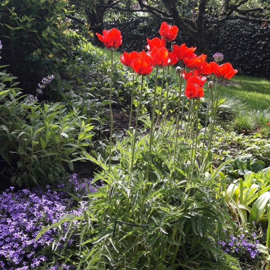 Pin Auf Pflanzen Tipps