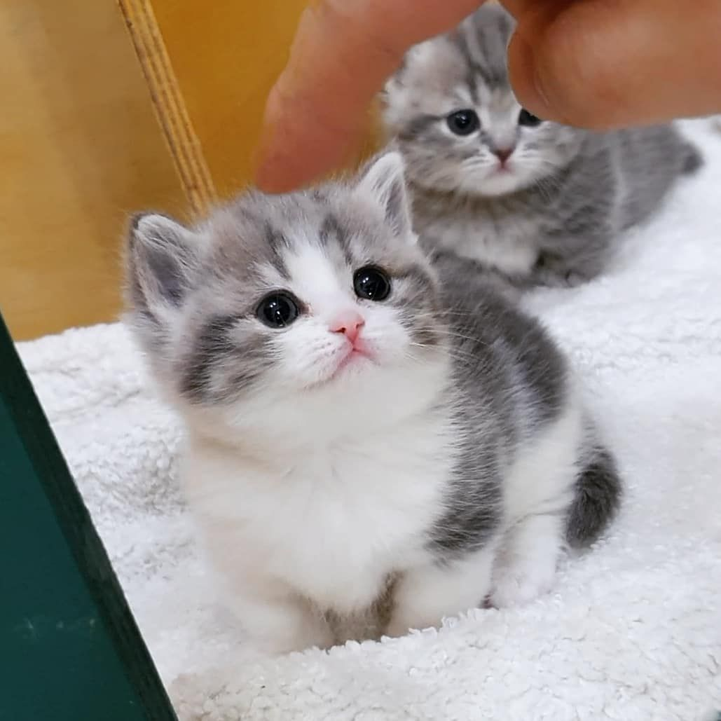 Pin By Olga Ermakova On Smeshnye Kotyata In 2020 Kittens Cutest Cute Cats Kittens