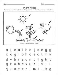 Types Of Plants Worksheets For Kindergarten