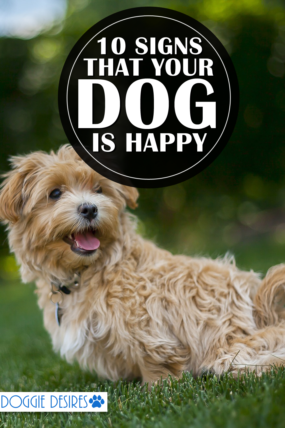 10 Signs That Your Dog Is Happy Dogs, Happy dogs, Dog care