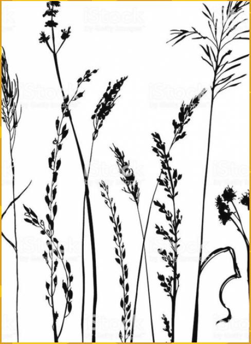 blumen drawn flowe gras handgezeichnete silhouetten