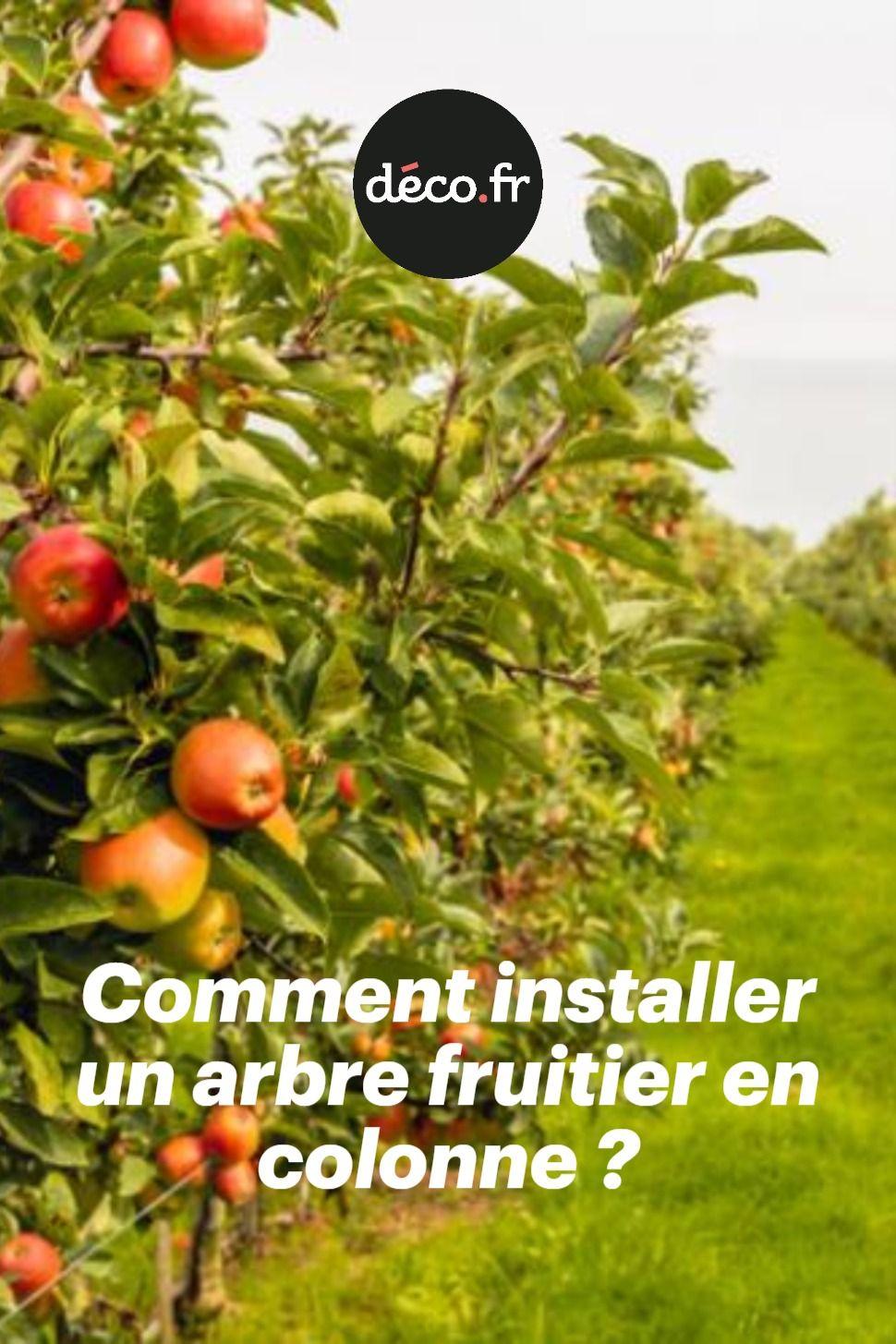 Comment Planter Un Arbre Fruitier comment installer un arbre fruitier en colonne | fruitier