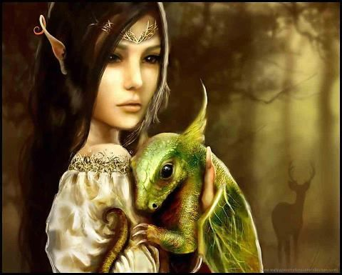 dragon and elf*