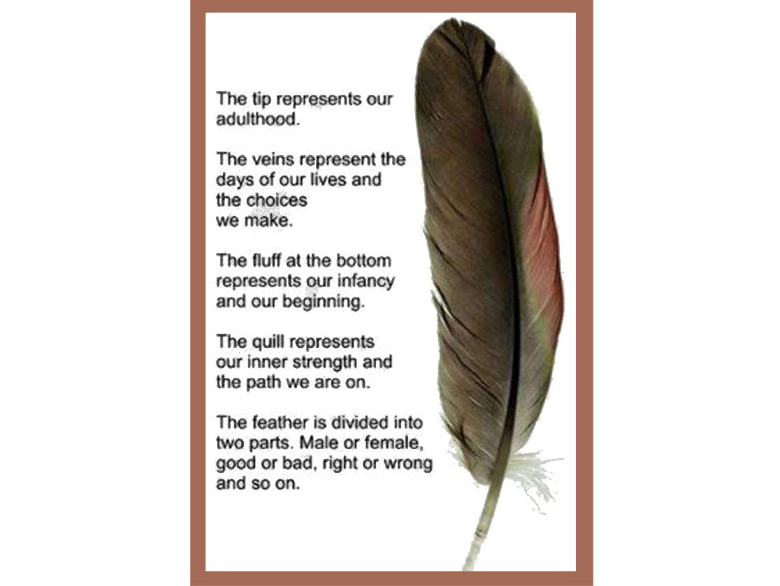 the teachings of the feather
