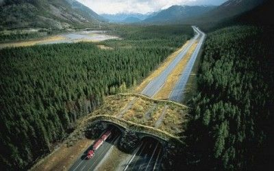 Canada. Sono stati costruiti dei passaggi larghi da 10 a 60 mt e ricoperti dalla vegetazione tipica del posto in modo da dare una certa familiarità ...