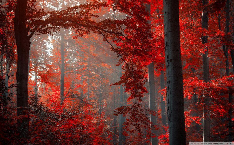 Red Forest Hd Wallpaper Nature Wallpaper Forest Wallpaper Autumn Forest