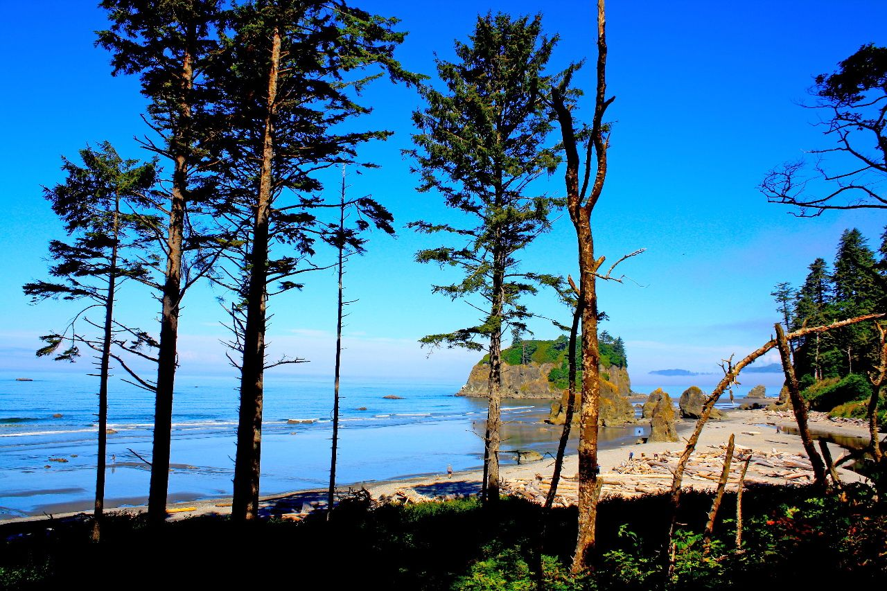 Trees and coastline at olympic National Park
