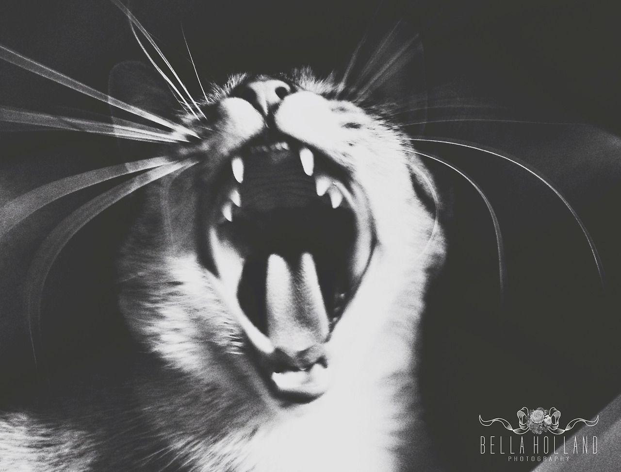 Wild Thang. #catober #cat #roar