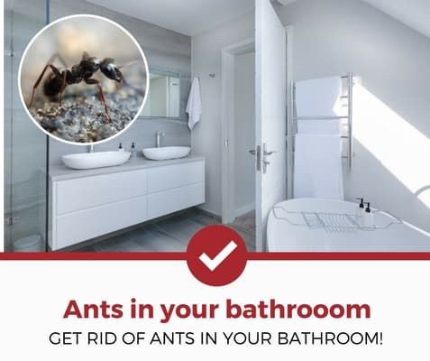 how to get rid of ants in bathroom (1) Ants control Pinterest