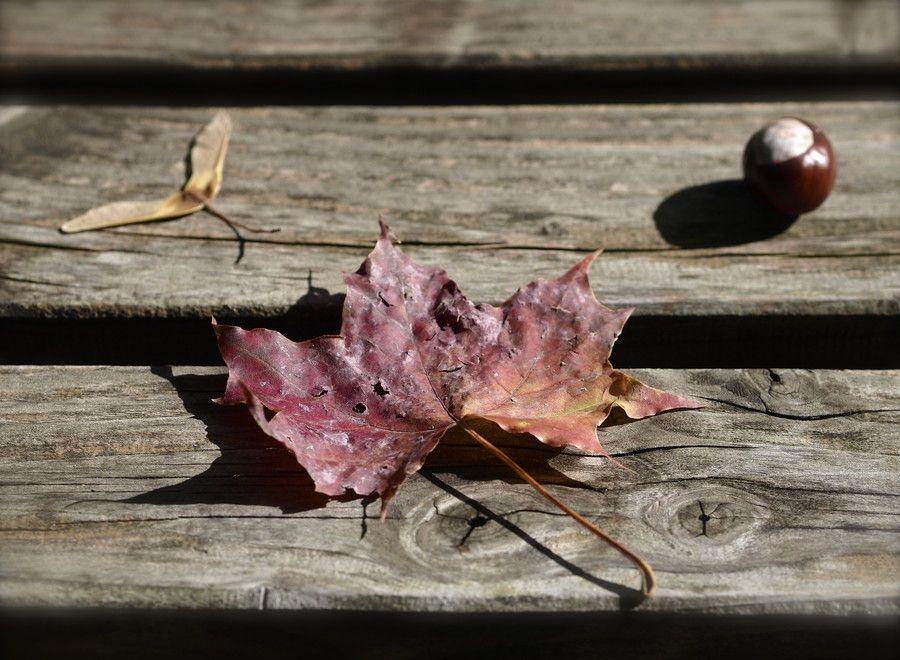 The Diary of Fall - 3 by Anastasia Dr on 500px