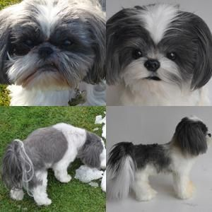 Product Gallery Custom Pet Products Pets Shih Tzu Toy Shih Tzu