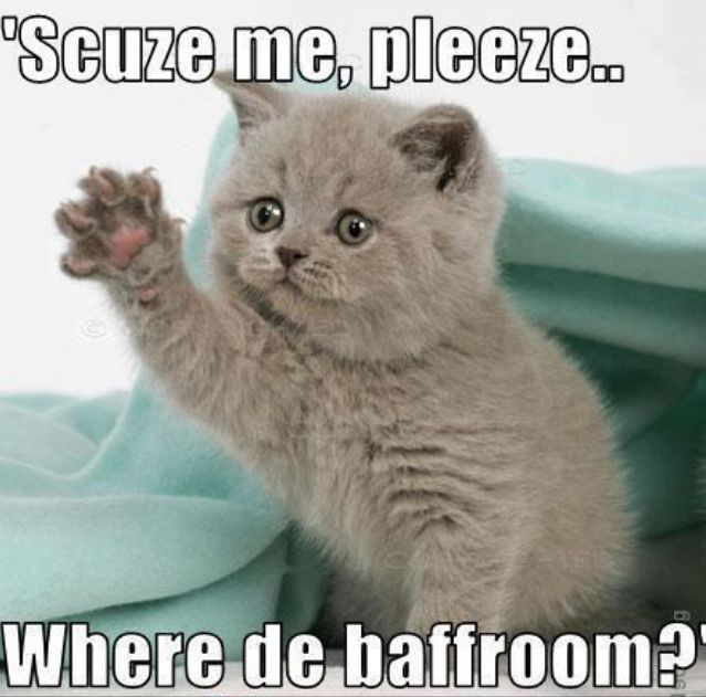 c20587158c0d3127f4883be6f19c48cd funny cat memes you have to see tap the link now to see all of