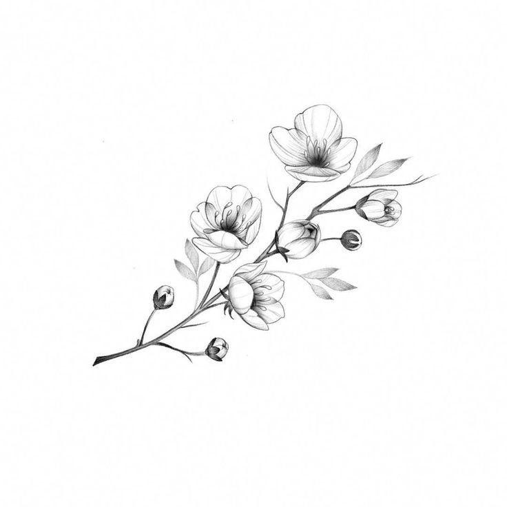 Pin On Drawings Florals
