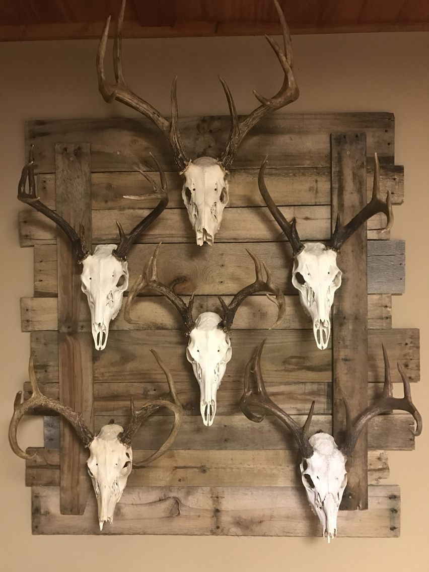 My European Mounts Hunting Decor Living Room Deer Hunting Decor