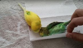 Heartbroken Bird Can't Accept That Her Friend Is Really Gone