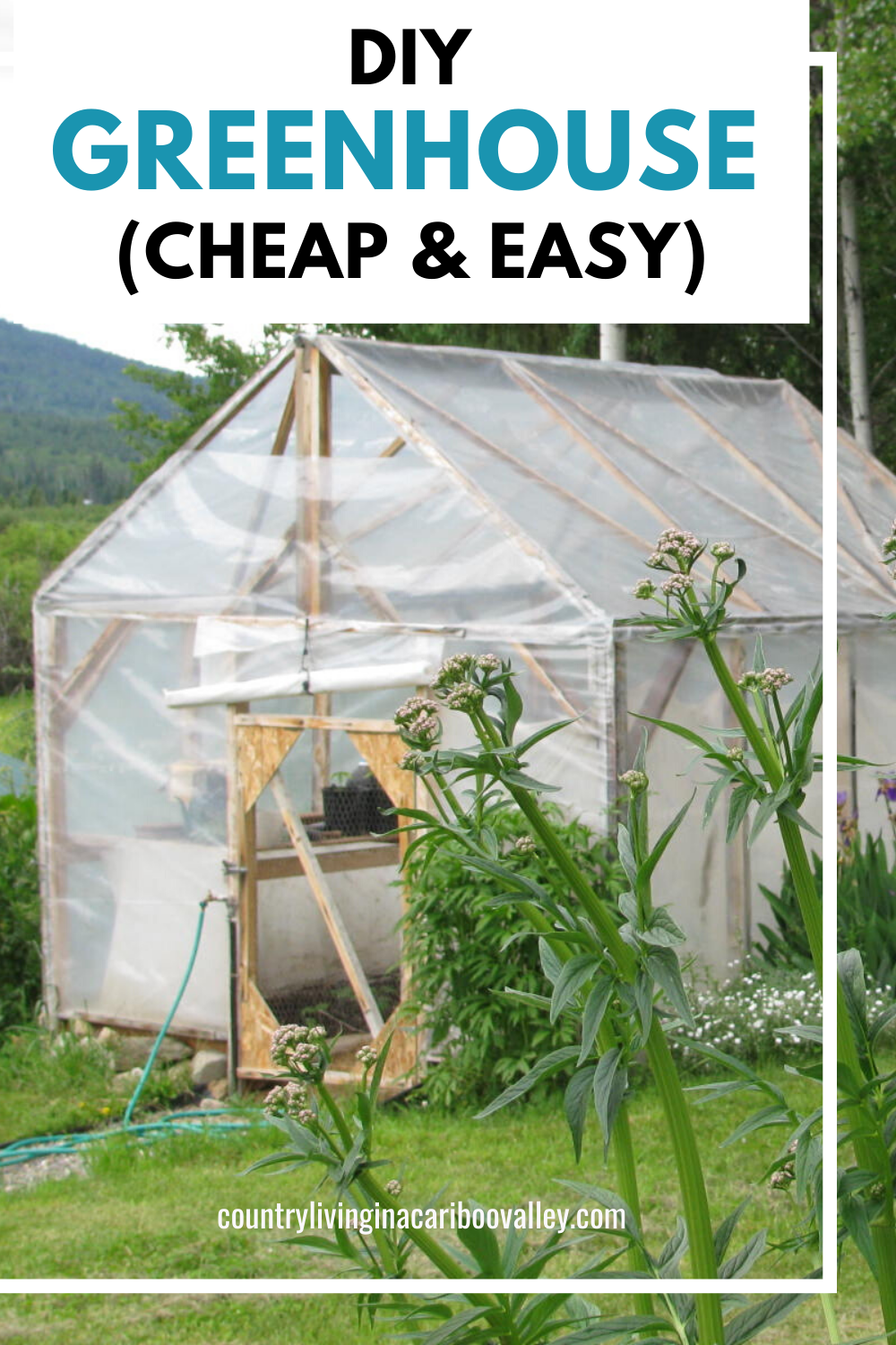 How To Build A Backyard Greenhouse For Under 200 Diy Greenhouse Diy Greenhouse Plans Greenhouse