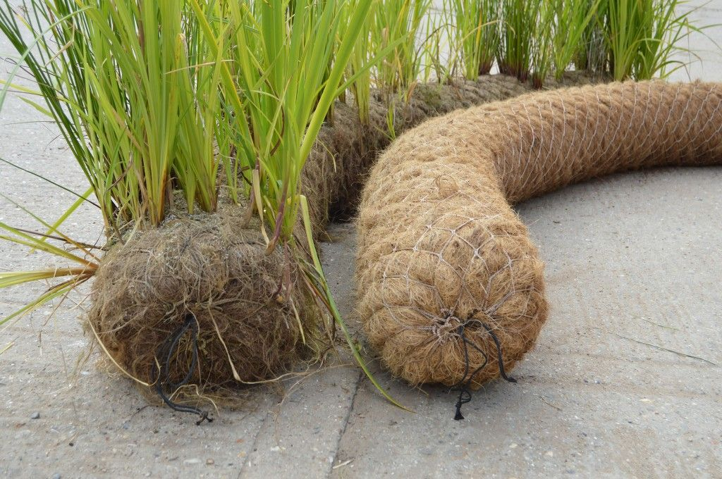 Prevegetated coir log Native plants, Coir, Erosion control