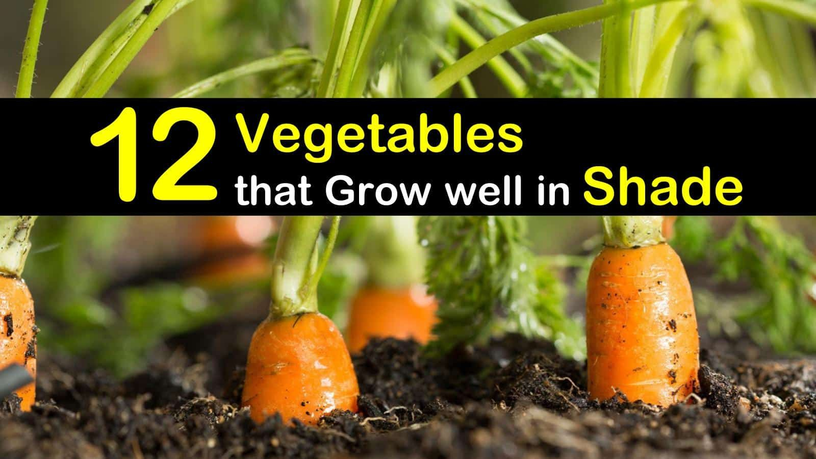 19 Vegetables For Growing In Shade Growing Carrots 400 x 300