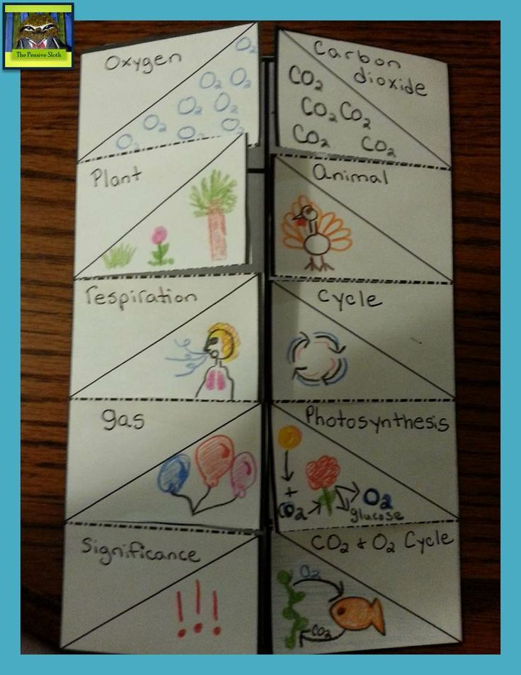 vocabulary foldable for 5th grade life science students make a foldable to illustrate and wri. Black Bedroom Furniture Sets. Home Design Ideas
