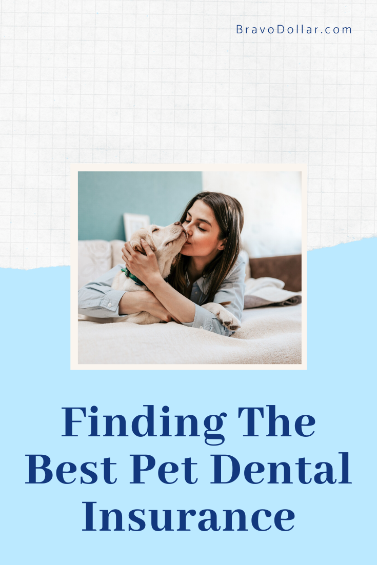 Pet Dental Insurance May Be Something You Want To
