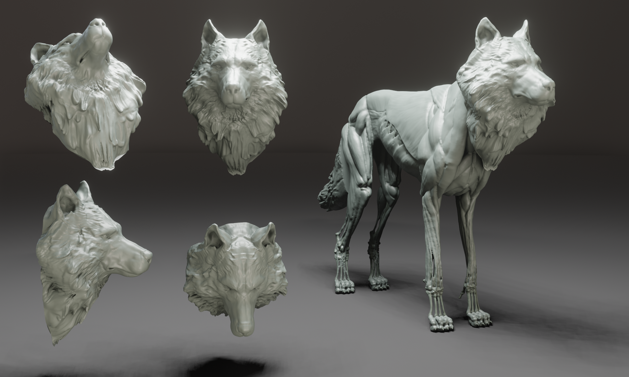 Artstation Wolf Ecorchet Resources In 2021 Wolf Bones And Muscles 3d Model Character