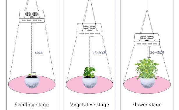 Charming Lampade Per Piante Da Interno: Come Scegliere Lampade O LED Per La  Coltivazione Indoor.
