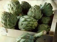 Alcachofa planta medicinal