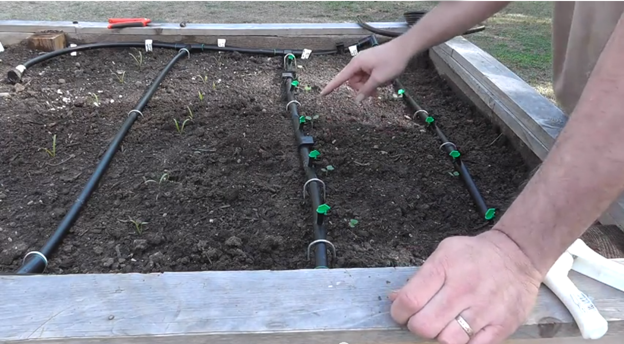 Installing A Drip System For Raised Beds Drip System 400 x 300