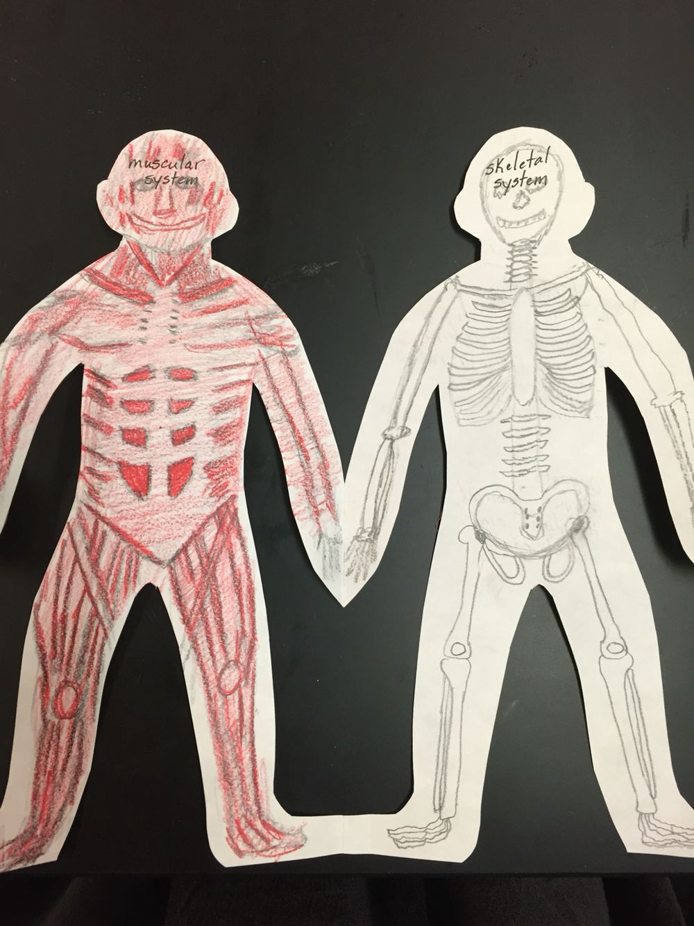 Human Body Systems- Paper Dolls | Cool Science! | Human ...