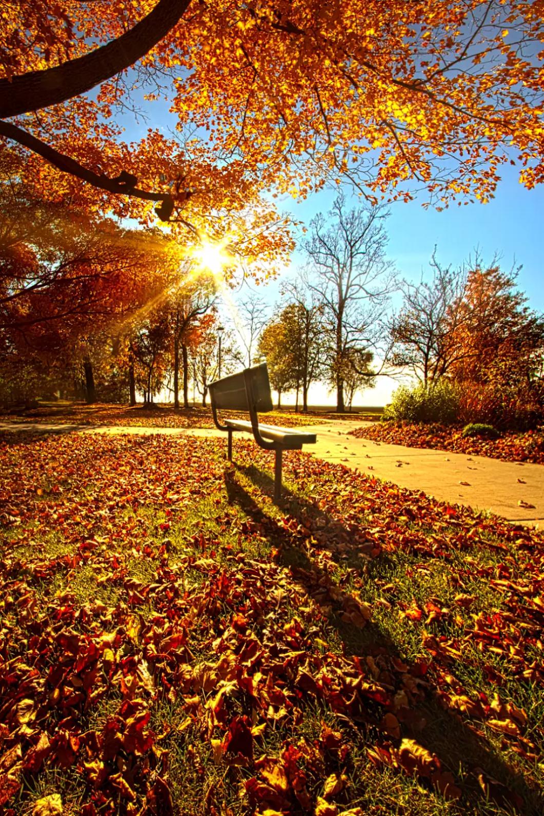 Осенние картинки из листьев
