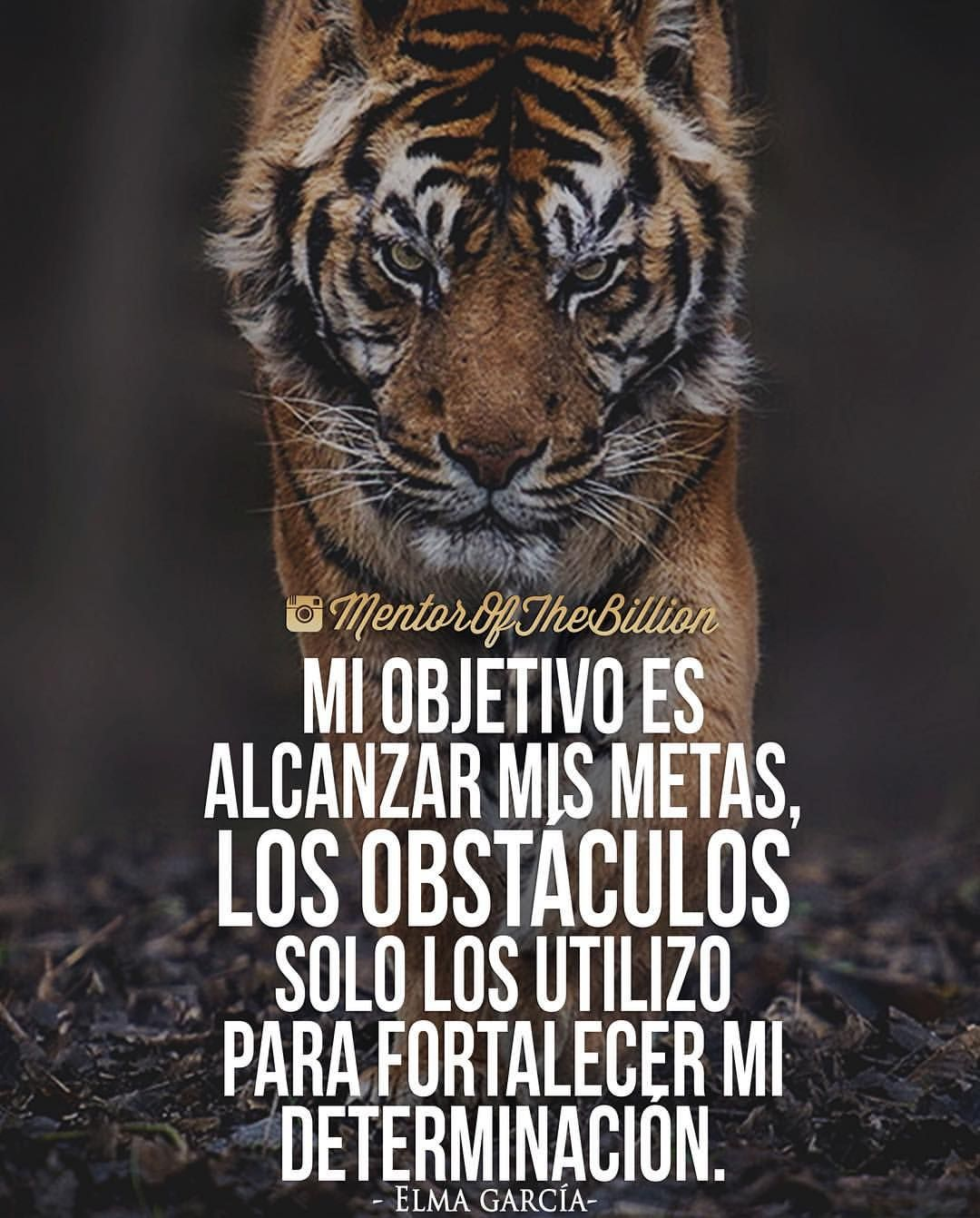 Comparte At Mentorofthebillion Frases Motivación
