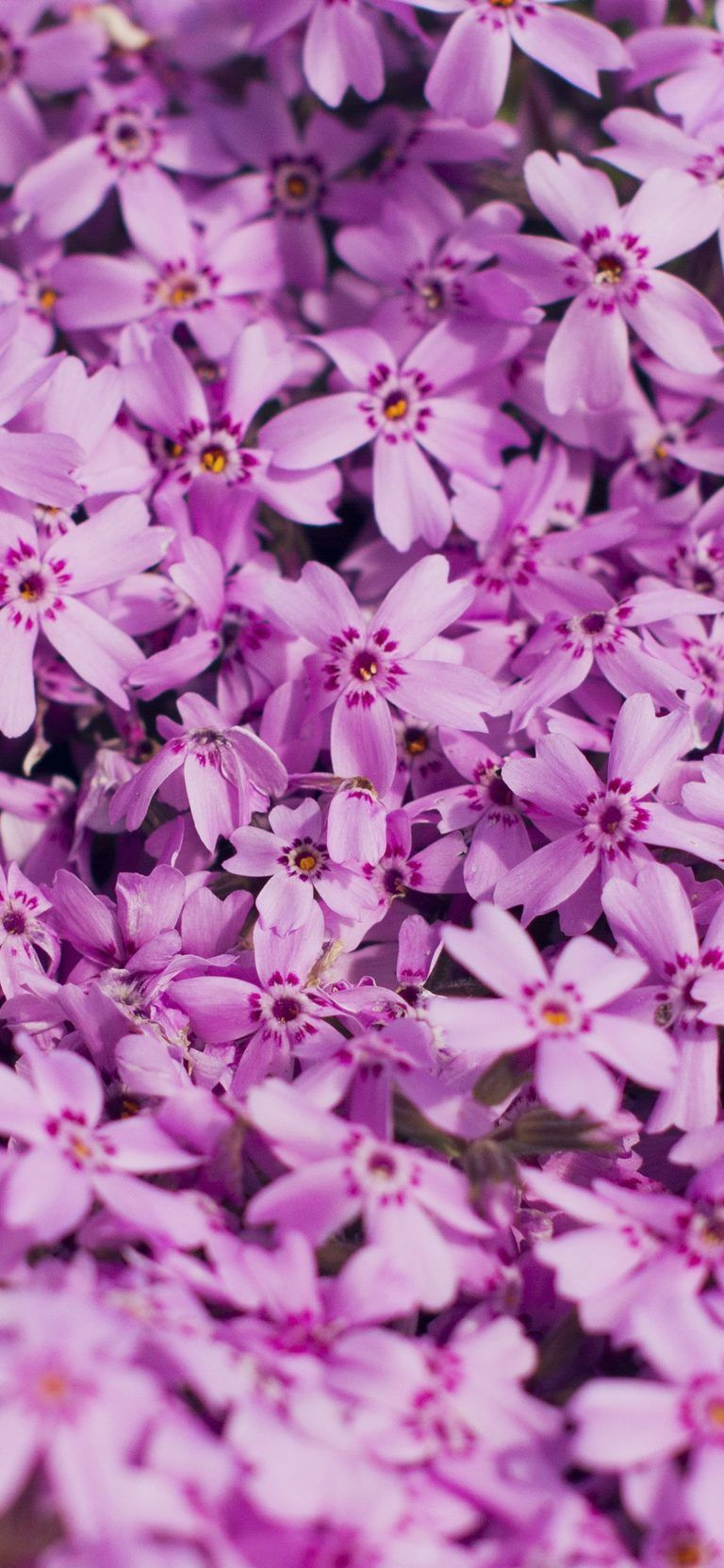 Iphone X Wallpaper Hd 1080p Flower Tecnologist Spring