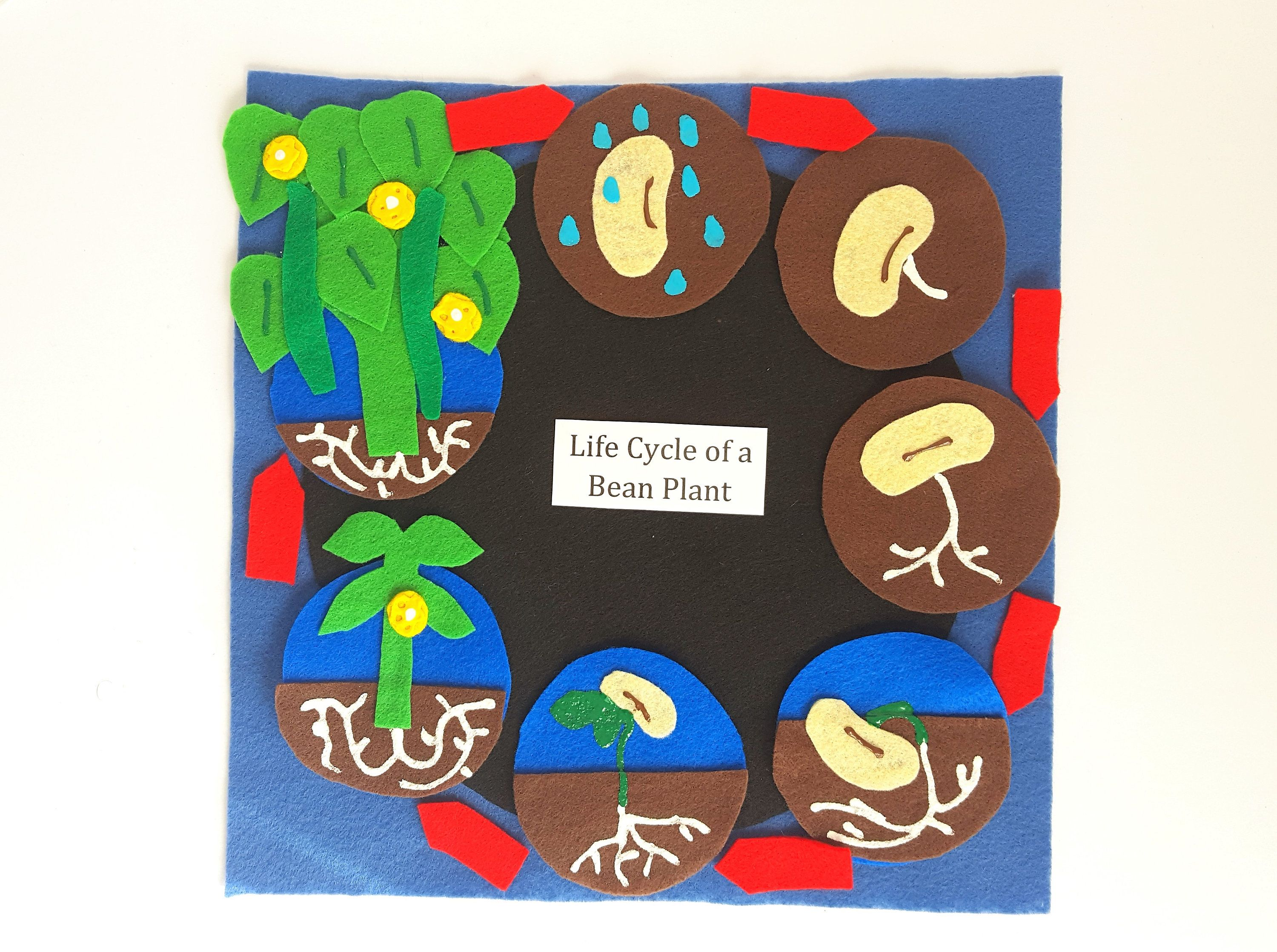 Bush Bean Life Cycle Series Felt Board Set With Laminated