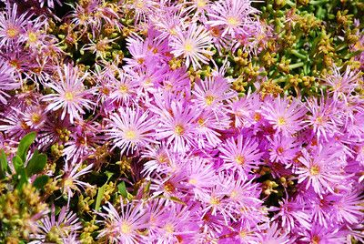 Flowers - Awakening the Self