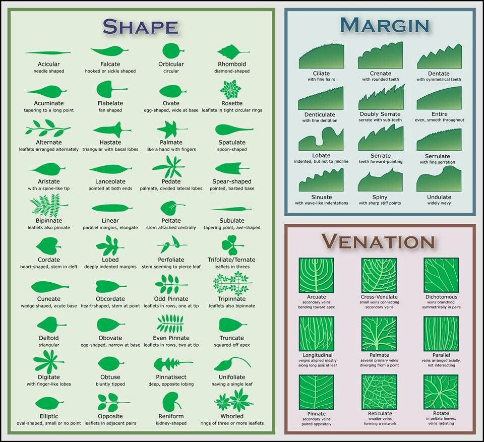 Leaf dichotomy | Earthy | Pinterest | Leaves, Homeschool and Montessori