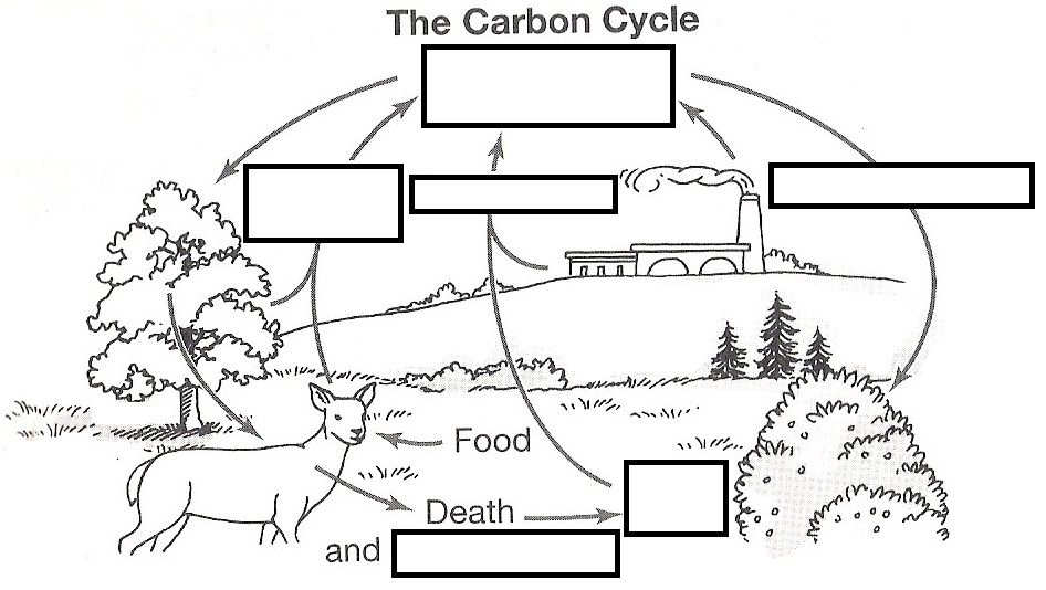 wizer me free interactive carbon cycle, biology, cycles, blended worksheet  - the carbon cycle by teacher