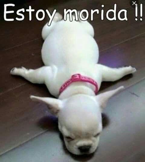 Estoy Morida Cute Animals Funny Animals Funny Animal Pictures