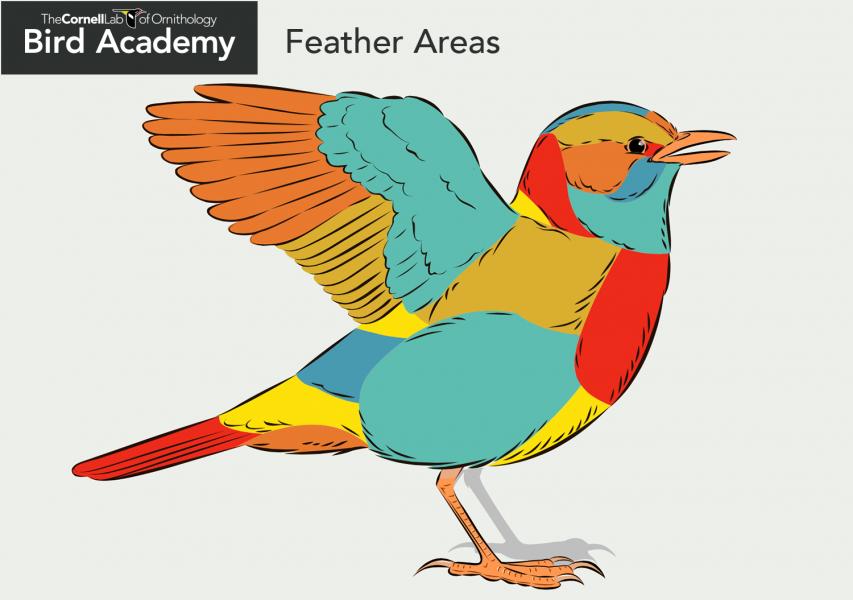 All About Bird Anatomy From Bird Academy Bird Bird Silhouette Art Animal Lover