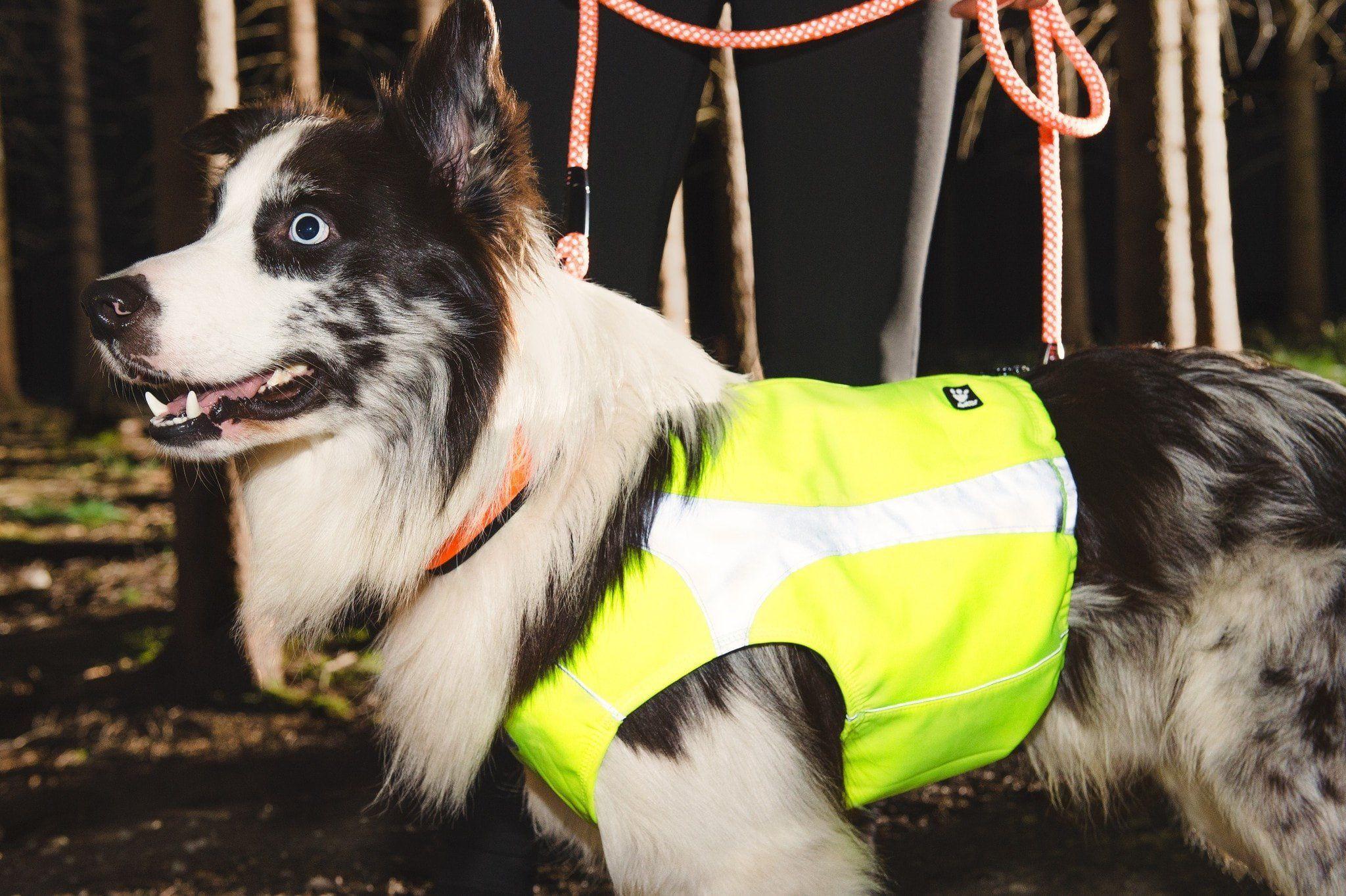 Hurtta Polar Visibility Dog Vest Dog Vest Dog Activities