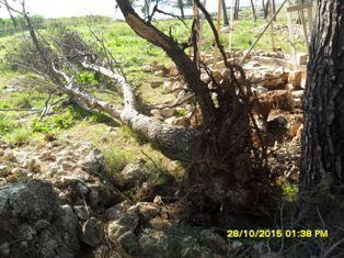 La Polizia Locale di Galatone sequestra oltre un ettaro di terreno rurale